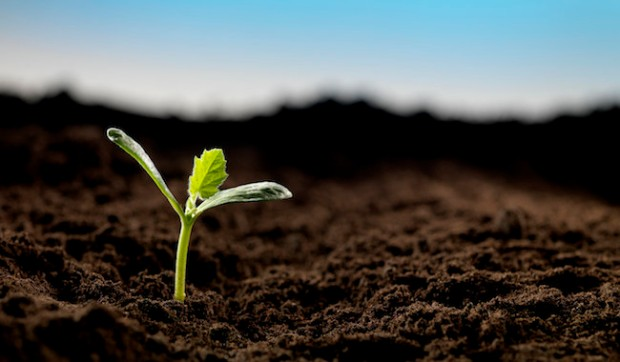 Seedling --- Image by © Andrew Brookes/Corbis